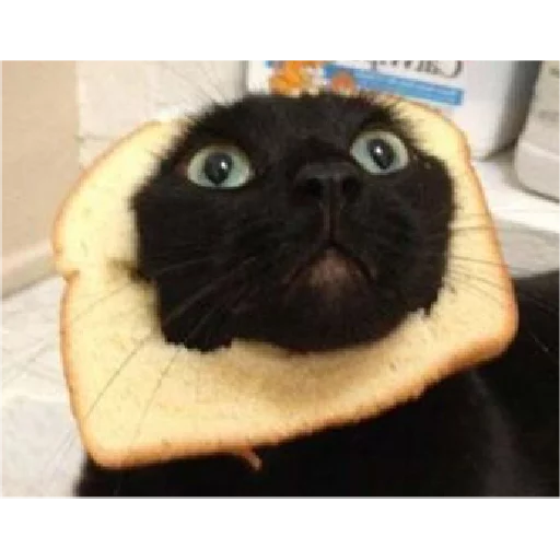 Cats - Sticker 9