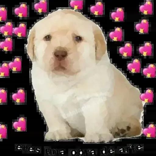 soft memes ¹ - Sticker 29