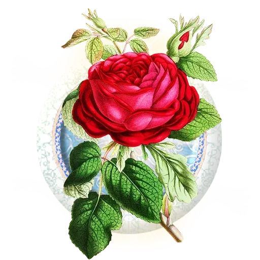 Persian2 - Sticker 15