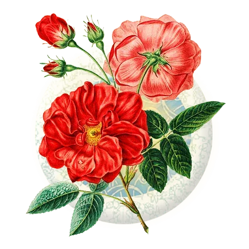 Persian2 - Sticker 13