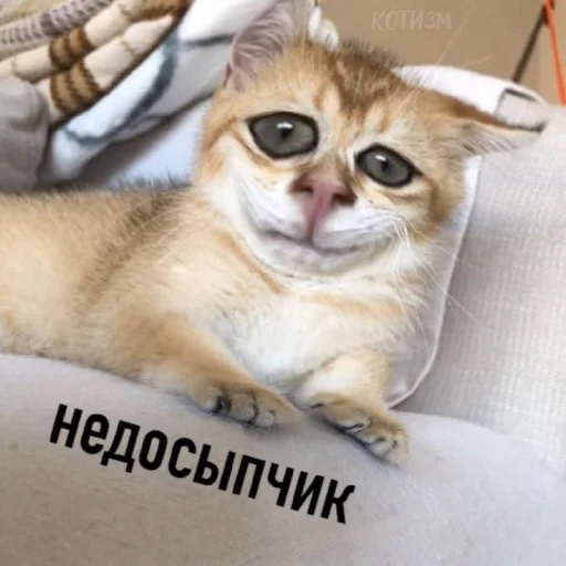 коты - Sticker 9