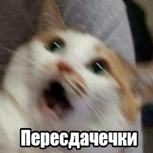 коты - Tray Sticker