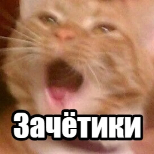 коты - Sticker 5