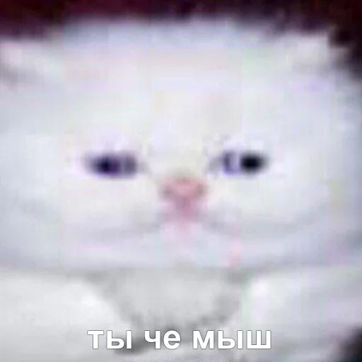 коты - Sticker 8