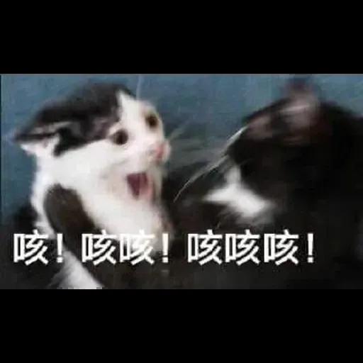 Wuhan pneumonia meme - Sticker 10