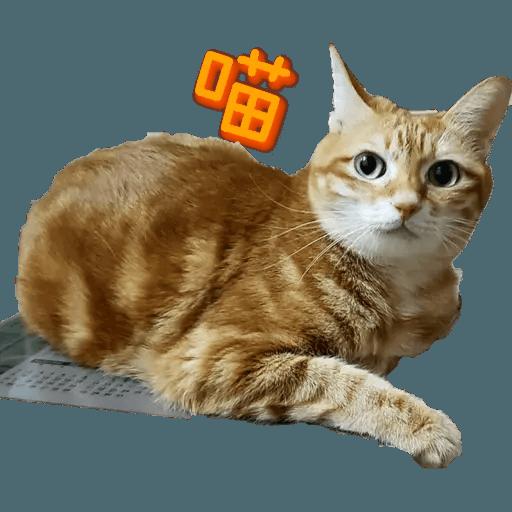 Tora and Kani 2 - Sticker 11