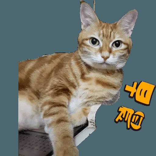 Tora and Kani 2 - Sticker 8
