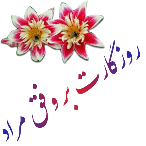مراد اکبری ۳ - Sticker 2