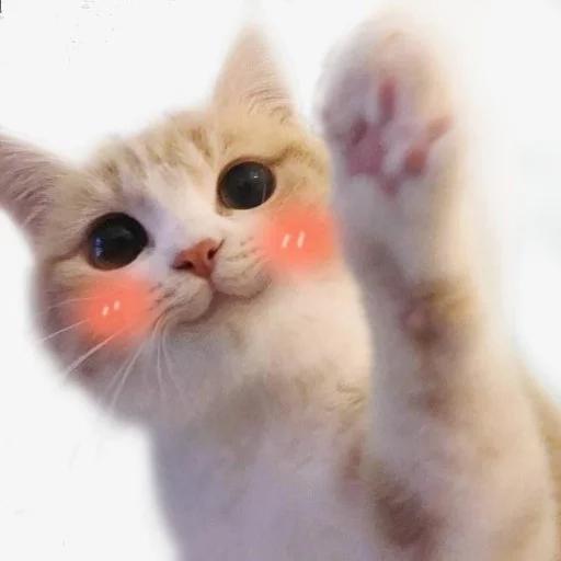 Cattt - Sticker 30