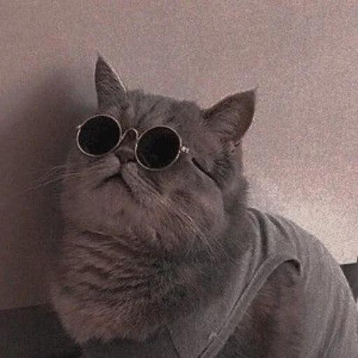 Meow - Sticker 12