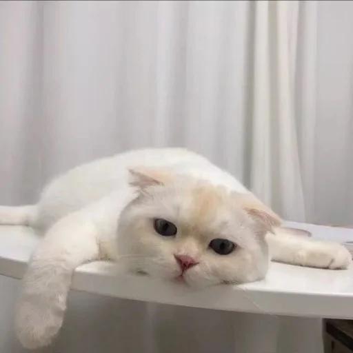 Meow - Sticker 7