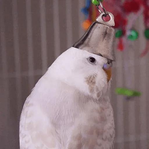 Bird 4 - Sticker 19