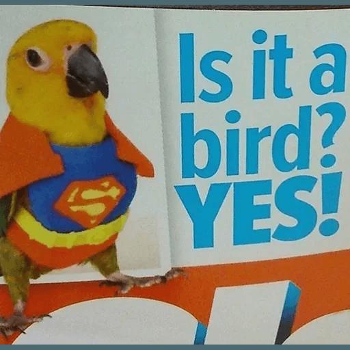 Bird 4 - Sticker 24