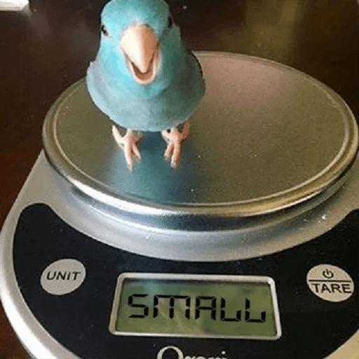 Bird 4 - Sticker 18
