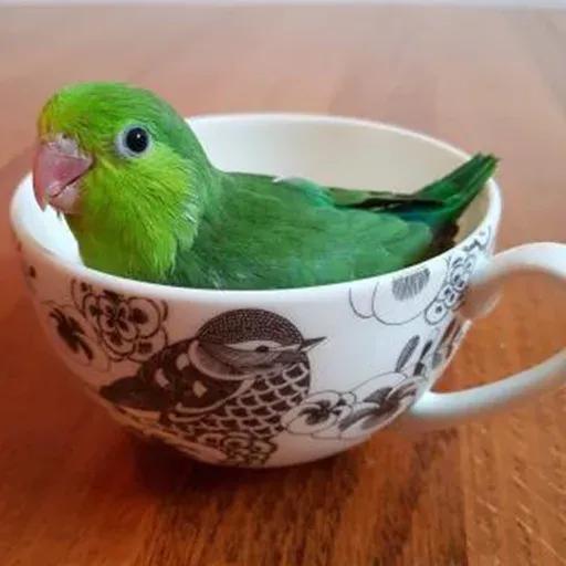 Bird 4 - Sticker 16