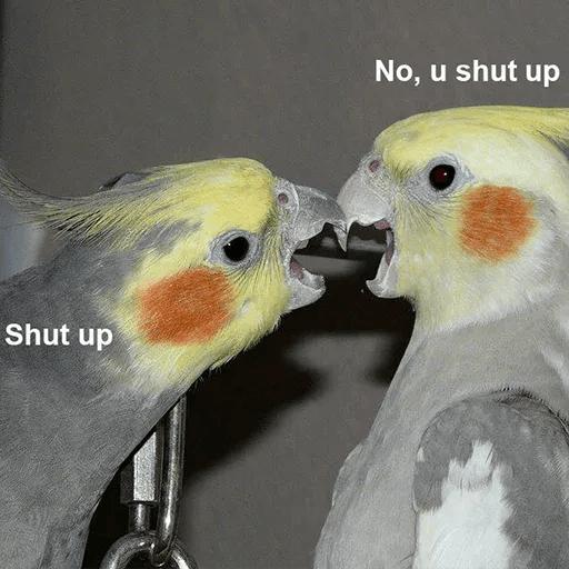 Bird 4 - Sticker 4