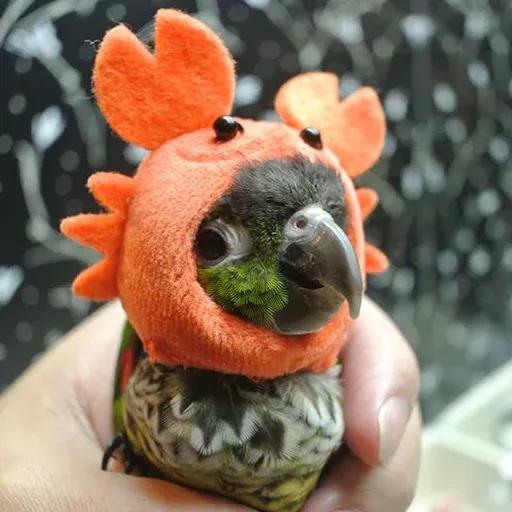 Bird 4 - Sticker 8