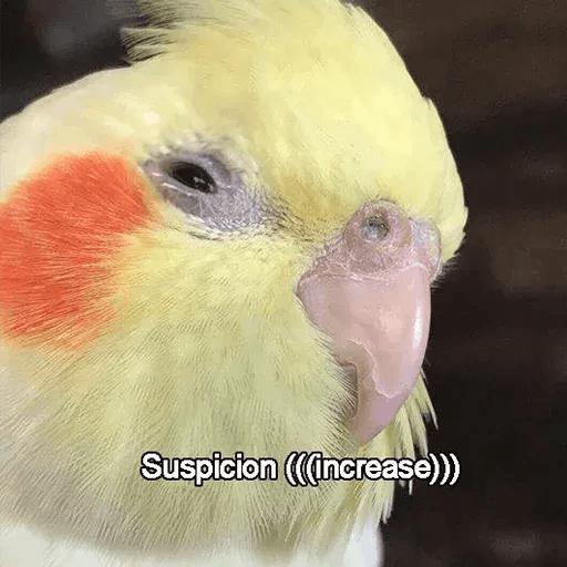 Bird 4 - Tray Sticker