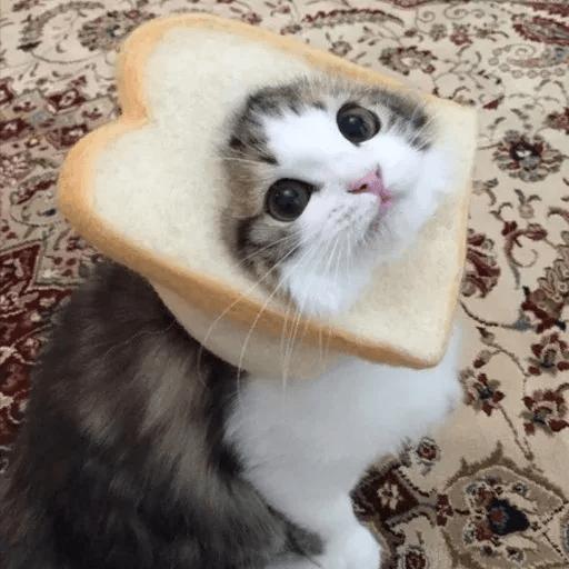 Meow:3 (3) - Sticker 6