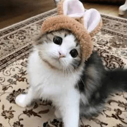 Meow:3 (3) - Sticker 9