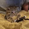 Meow:3 (3) - Tray Sticker