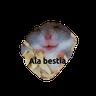 gatos - Tray Sticker