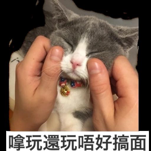 撳寶羅壹 - Sticker 24