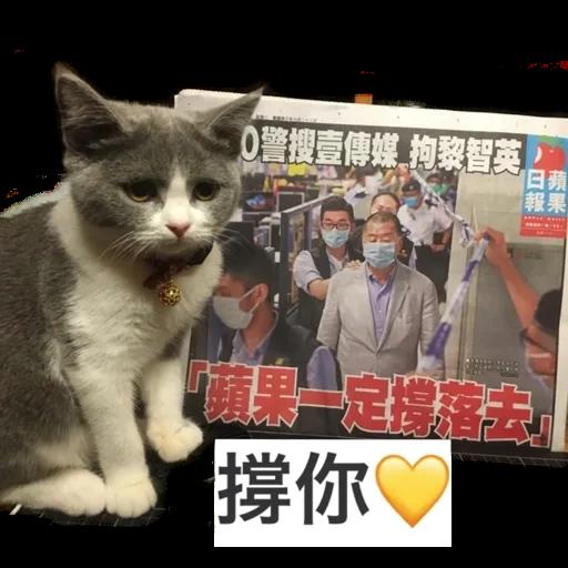 撳寶羅壹 - Sticker 15