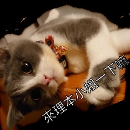 撳寶羅壹 - Sticker 30
