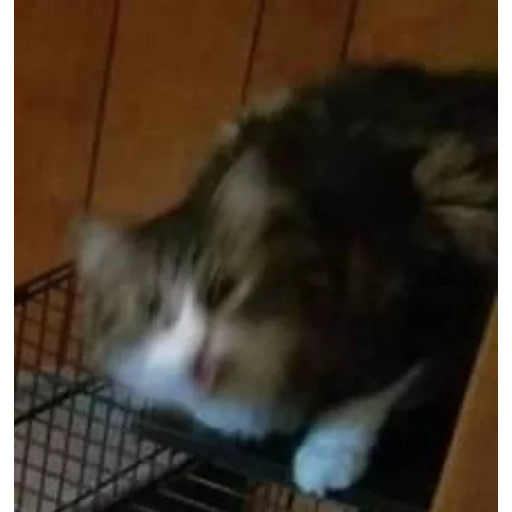 Cat 3 - Sticker 16