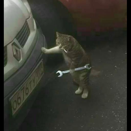 Cat 3 - Sticker 6
