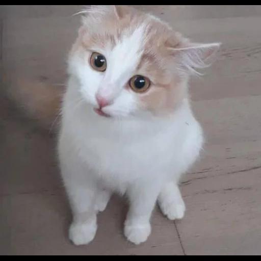 Cat 3 - Sticker 21