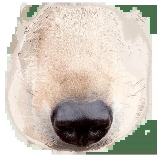Animal Faces Masks - Sticker 22