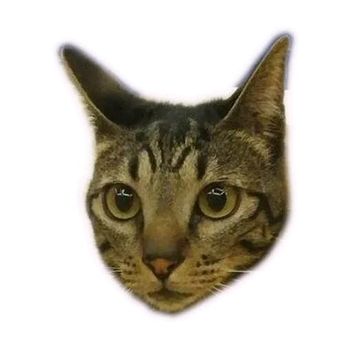 Angel the Meow - Sticker 4