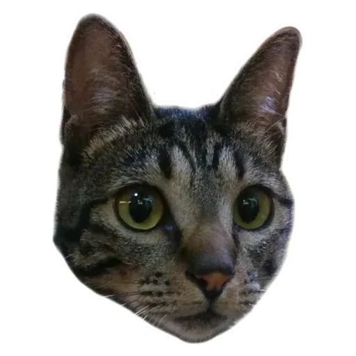 Angel the Meow - Sticker 1