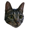 Angel the Meow - Tray Sticker
