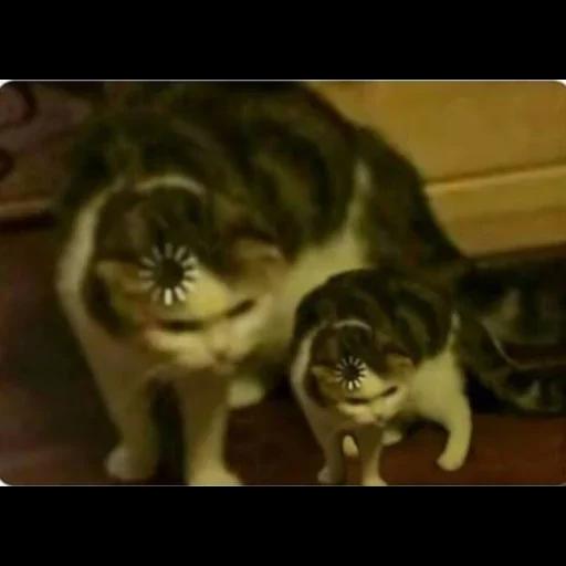 Cat22 - Sticker 12
