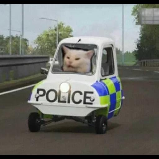Cat22 - Sticker 24