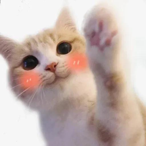 Cat2 - Sticker 3