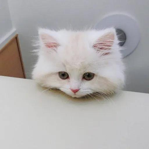 Cat2 - Sticker 4
