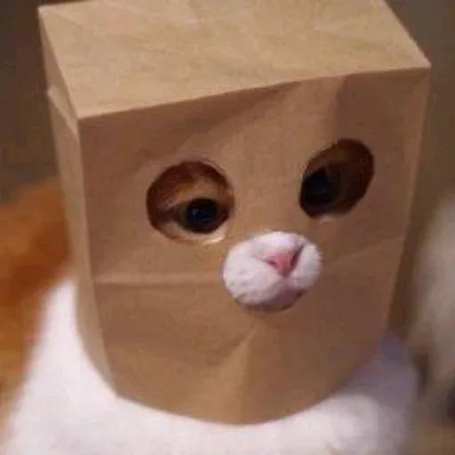Cat2 - Sticker 5