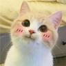 Cat2 - Tray Sticker
