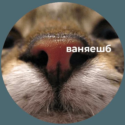 aleshaanimals - Sticker 30