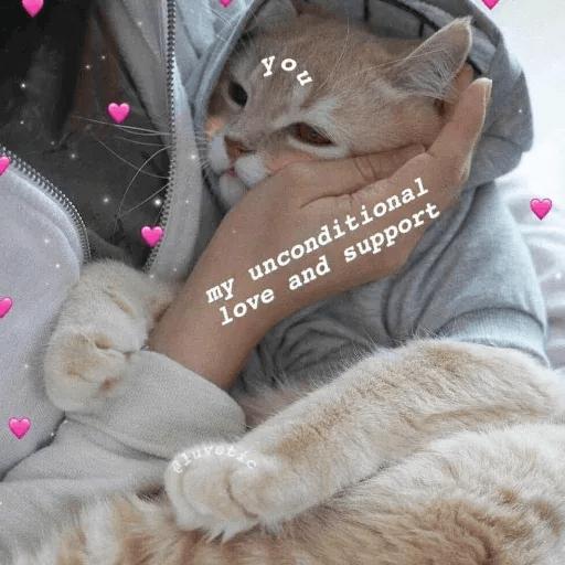 Meow:3 (1) - Sticker 20