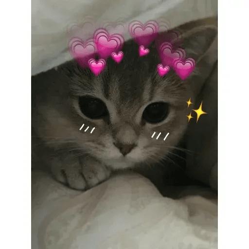 Meow:3 (1) - Sticker 29