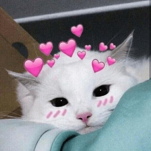Meow:3 (1) - Sticker 14