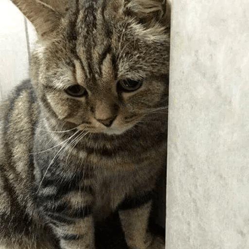 Meow:3 (1) - Sticker 24