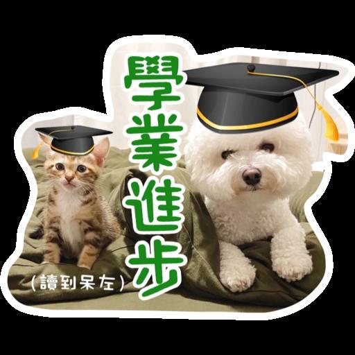 Kira Chan CNY 小新粒子賀年貼紙 - Sticker 13