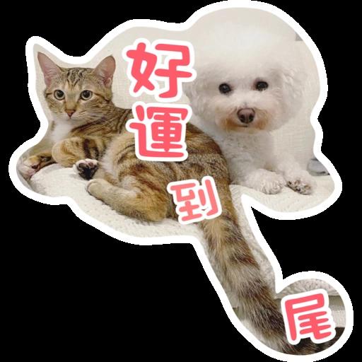Kira Chan CNY 小新粒子賀年貼紙 - Sticker 12