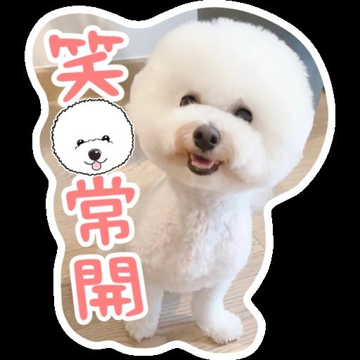 Kira Chan CNY 小新粒子賀年貼紙 - Sticker 2